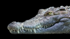 Le lapin et le crocodile 3
