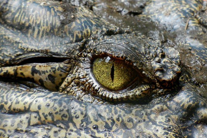 Le lapin et le crocodile 1