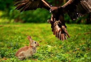 Lapin et aigle